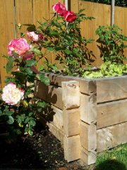 gardenbox4.jpg